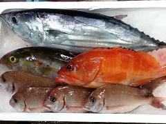 田中水産 鹿児島 地魚セット