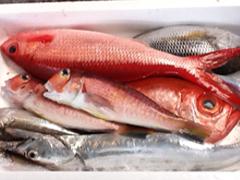鹿児島 地魚
